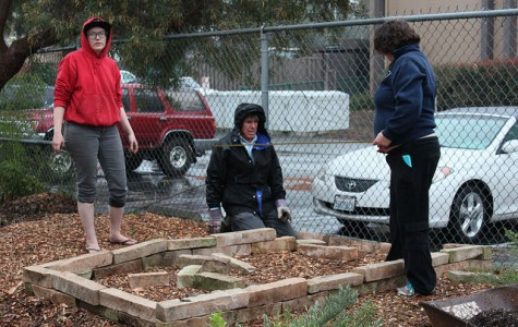 Club plants seeds for DIY gardens