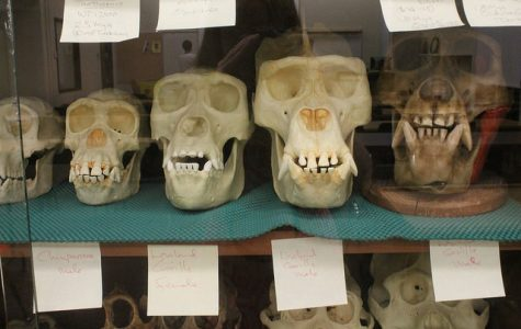 New DVC anthropology institute offers tools to thrive in today's world
