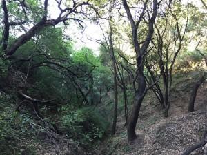 Briones Regional Park.