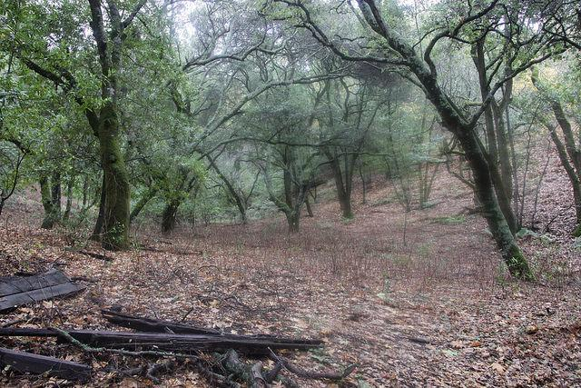 A rainy day at Briones Regional Park