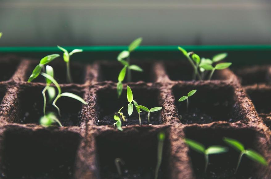Horticulture club's ingenious idea: the crop swap