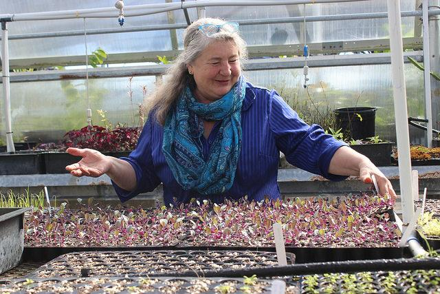Bethallyn Black, DVC horticulture instructor tends seedlings in a campus greenhouse, October 16, 2016.