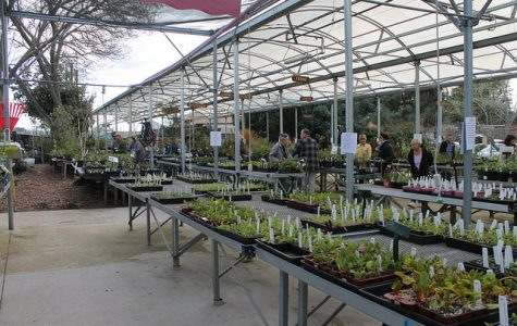 DVC Horticulture holds annual plant sale