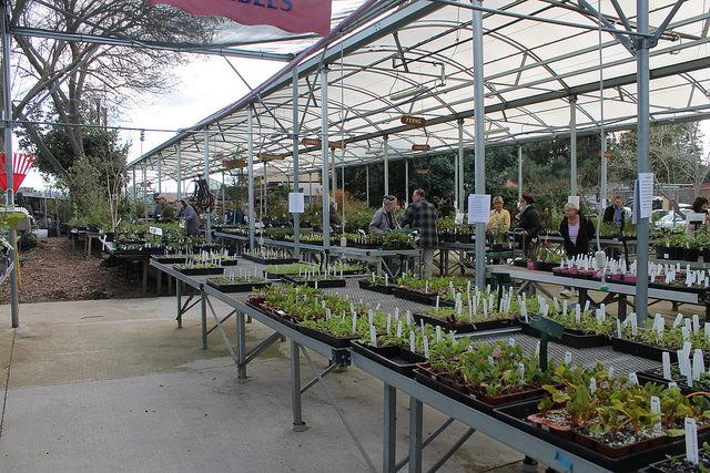 DVC Horticulture holds its annual plant sale on February 24, 2017.