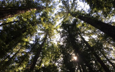 Trails Challenge series: Redwood Regional Park is a sensory delight