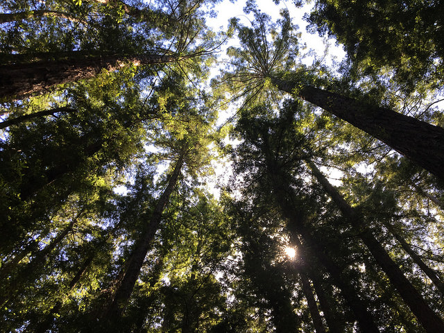 Redwood+Regional+Park+is+a+gem+of+the+East+Bay.
