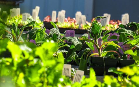 Horticulture club hosts monthly plant sale